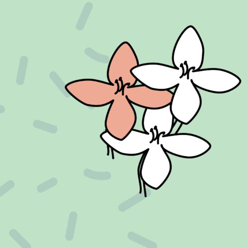 Plant Patterns Image